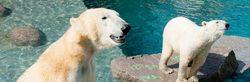 Mulhouse Zoo