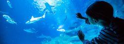 Aquarium of Paris