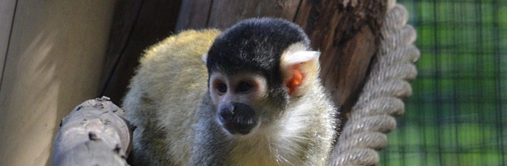 Billets Pour Menagerie Le Zoo Du Jardin Des Plantes Ticketeaser