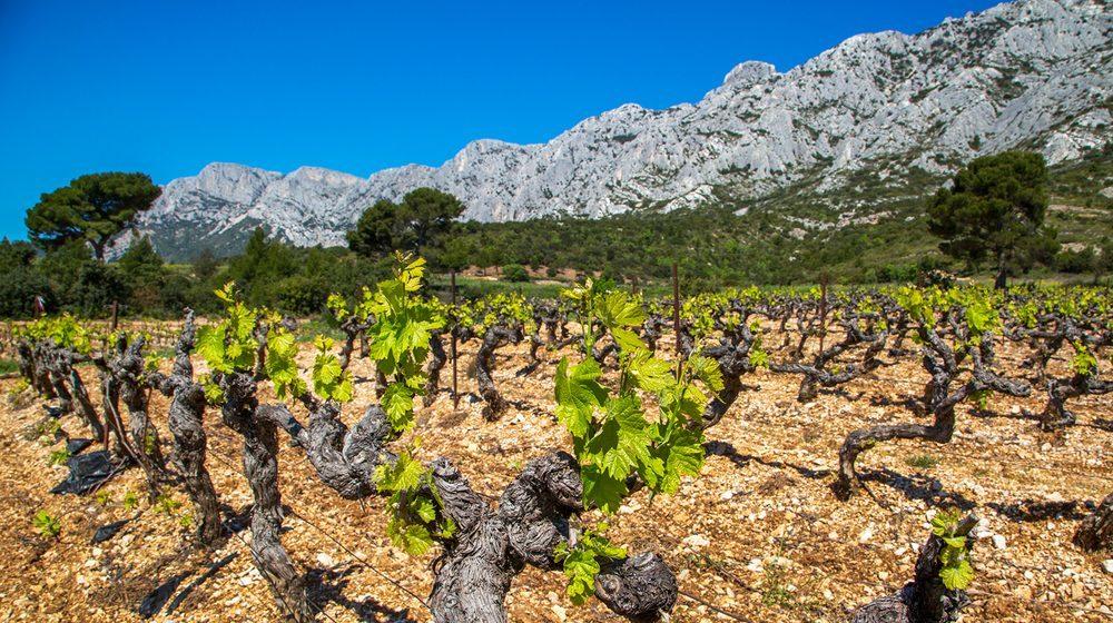 City Pass Aix-en-Provence - Vignes du Pays d'Aix - Sud LuberonCity Pass Aix-en-Provence - Vignes du Pays d'Aix - Sud Luberon © Sophie Spitéri