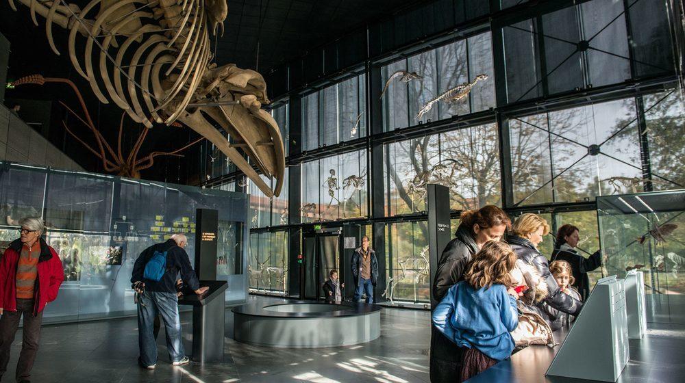 Muséum d'histoire naturelle de Toulouse