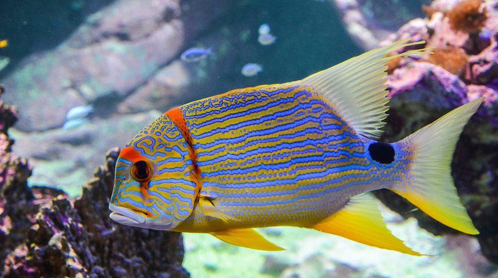 Les aquariums à la Cité de la Mer Cherbourg