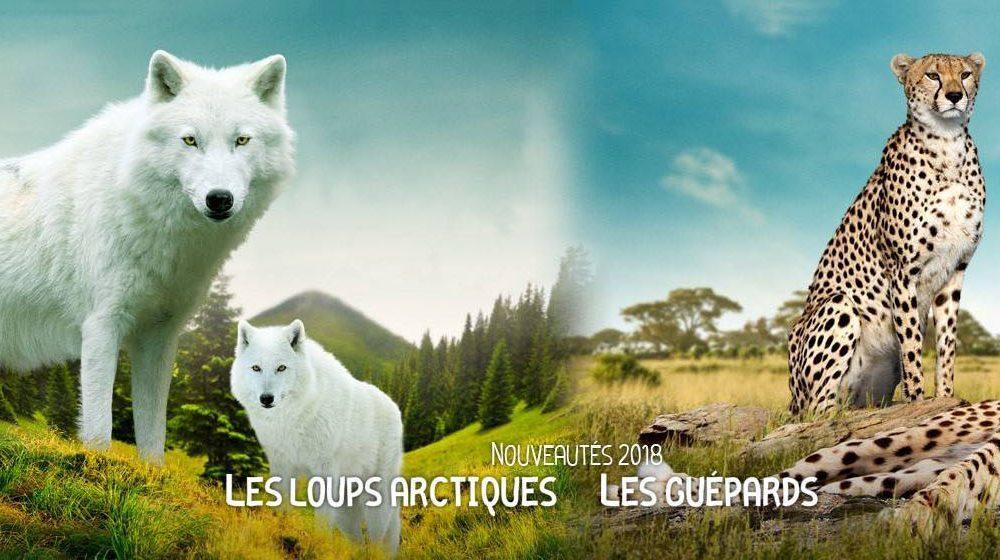 Zoo de Beauval - Loups arctiques et Guépards