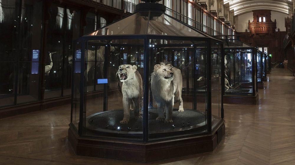 Grande Galerie de l'Evolution - Salle des espèces disparues © MNHN - Bernard Faye