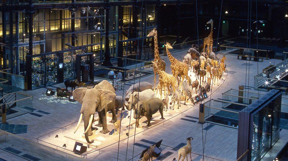 Grande Galerie de l'Évolution en 1994 © MNHN - Bernard Faye