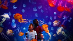 Aquarium Sea Life à Londres - face à face avec les méduses