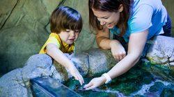 Aquarium Sea Life à Londres - Bassin tactile