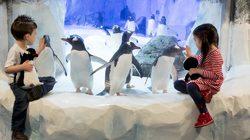 Aquarium Sea Life à Londres - Devant les pinguins