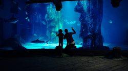 Aquarium Sea Life à Londres - Devant les poissons