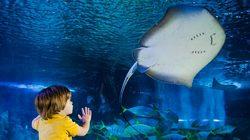 Aquarium Sea Life à Londres - Bassin aux Raies