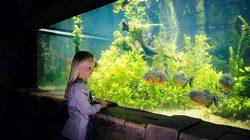 Aquarium Sea Life à Londres - Bassin aux Piranhas